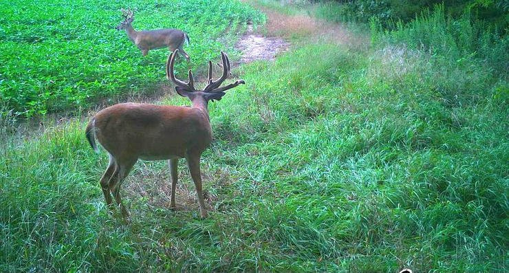 Trail camera intel was crucial is finding and targeting this giant whitetail. (Frank Ellis photo)