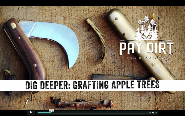 Learn how to graft seedlings and save money on Pay Dirt.