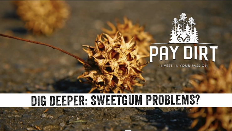 Learn how to control invasive vegetation on Realtree 365's Pay Dirt.