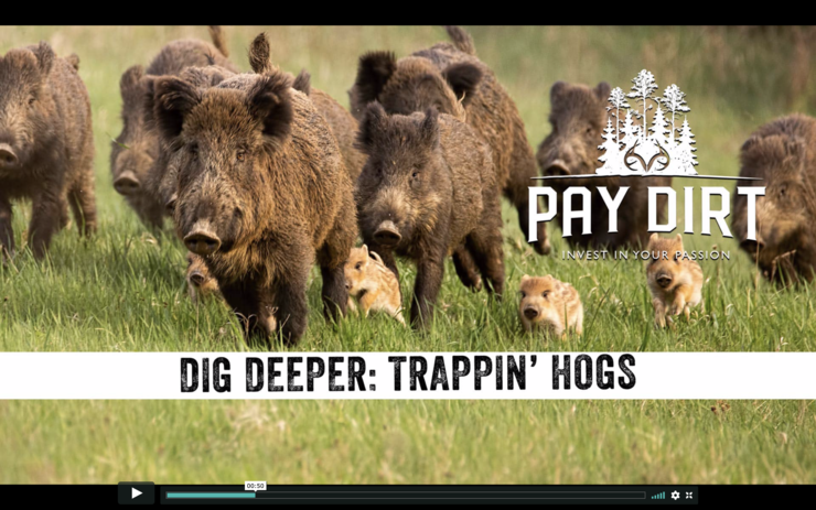Check out tips on hog control on Realtree 365's Pay Dirt.