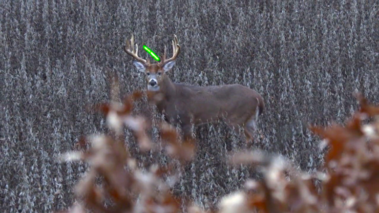 That buck is a millisecond away from a bad day. (Midwest Whitetail photo)