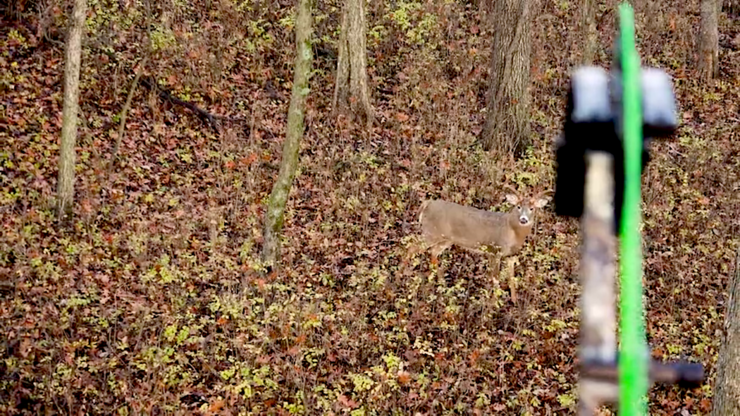 This big deer came cruising by in search of a hot doe. (Krysten McDaniel photo)