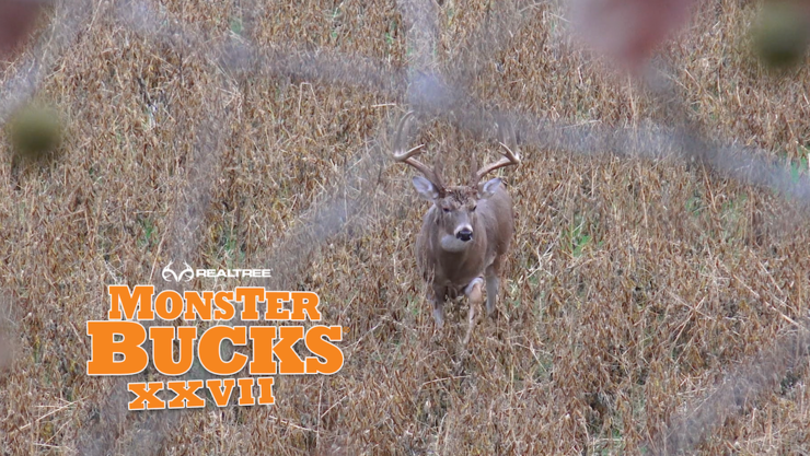 A big Illinois buck steps out into a bean field. (Adrenaline Junkies photo)