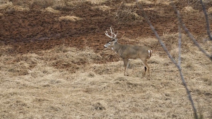 That deer is certainly within Traditions muzzleloader range. (Legends of the Fall photo)