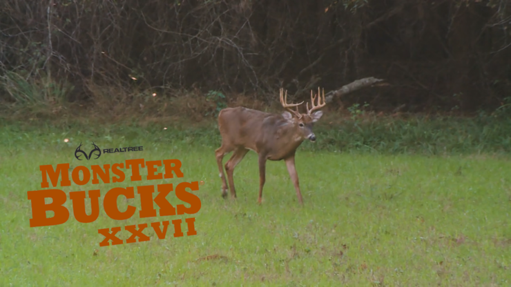 A big Realtree Farms buck steps out into the food plot. (Realtree photo)