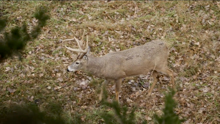 That's what you call a close-range shot. (Realtree photo)
