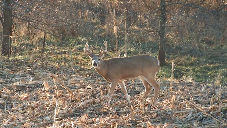 Lining up the crosshairs on a corn-fed giant is what the late season is all about. (Realtree photo)