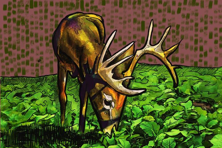 Want to stick a big buck as it munches on turnips at 20 yards this fall? Plant the right shape food plots. (Ed Anderson illustration)