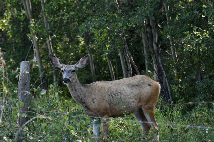 CWD affects all cervids, not just white-tailed deer. (Shutterstock / Pam Walker photo)