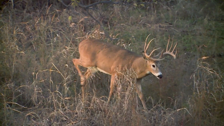 Could you stay calm enough to make the shot on a deer like this one? (Realtree photo)