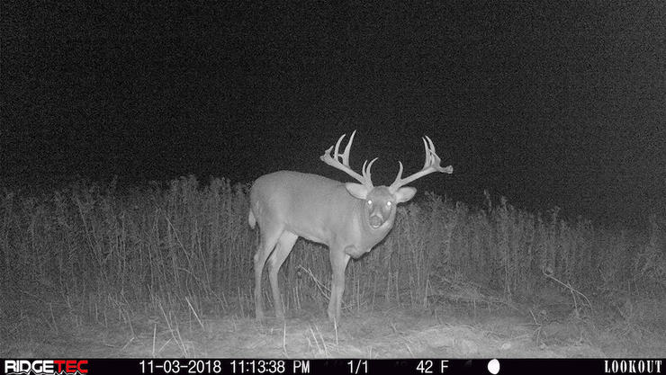 The buck made a big jump in 2018 and packed on nearly 200 inches of antler. (Canada in the Rough photo)