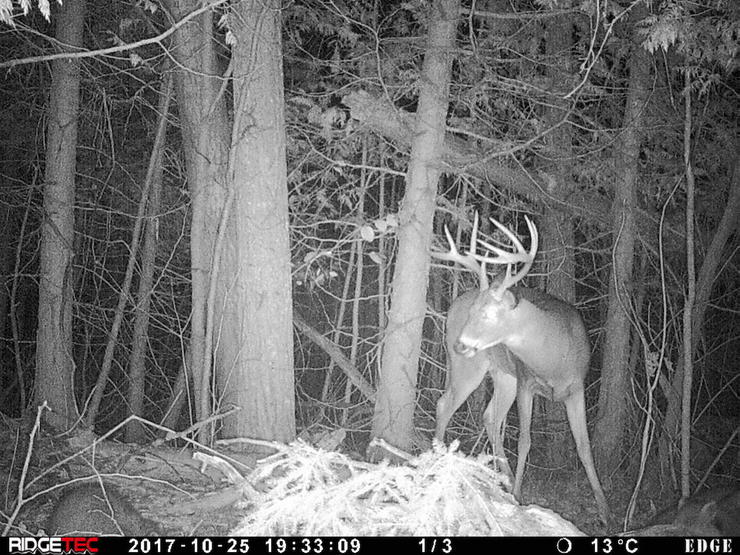 A trail camera photo from when the Beasley crew first started following this buck in 2017. (Canada in the Rough photo)