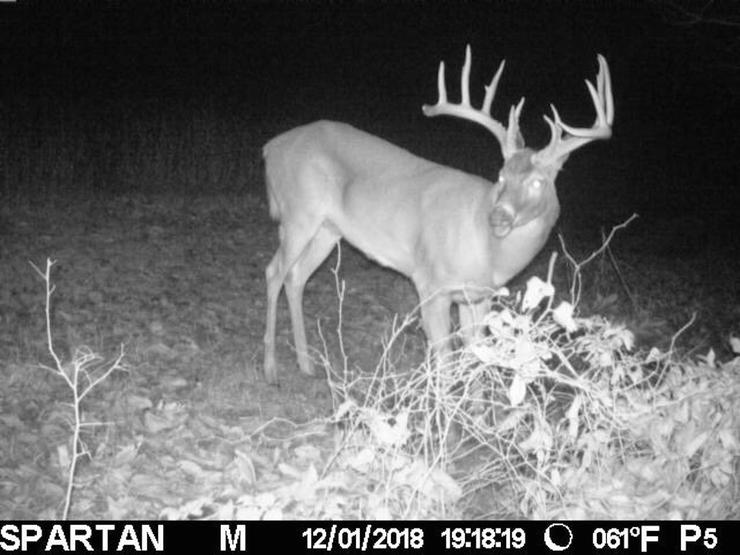 Spartan trail cameras helped pattern this buck. (Photo courtesy of Jason Koger)