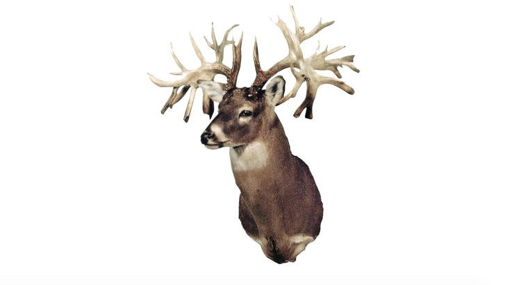This Missouri buck is the most iconic of any that's ever walked the earth. It's not only the state record non-typical but also the world record. (Boone and Crockett photo)