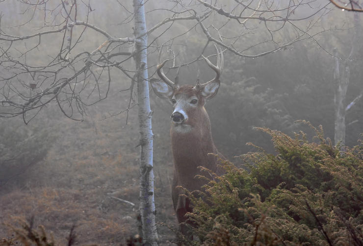 So, what does all of this mean for deer hunters? It means, at least in most states, things are looking up in terms of buck harvests. (Shutterstock / Jim Cumming photo)