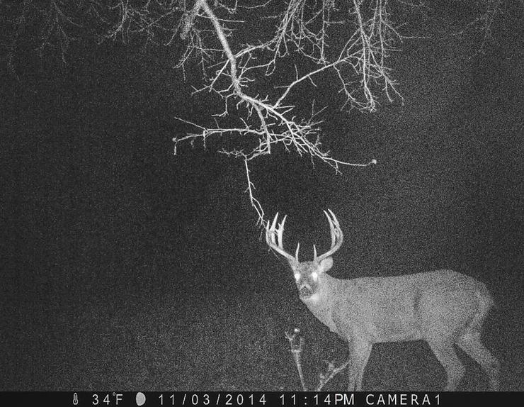It's common to get photos of giants, like this one. We obsess over these bucks and constantly strategize on ways to kill them. Sadly, most we never even see in person. (Scott Bestul photo)