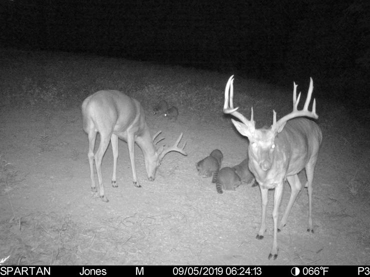 His Spartan trail camera played a big role in harvesting this buck. (Kyle Culbreth photo)