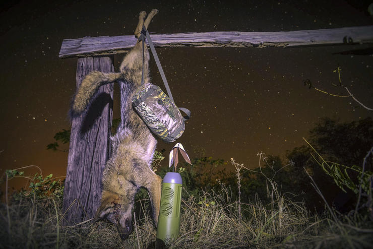Hunting at night can be one of the most effective ways to take coyotes. (© Byron South courtesy photo)