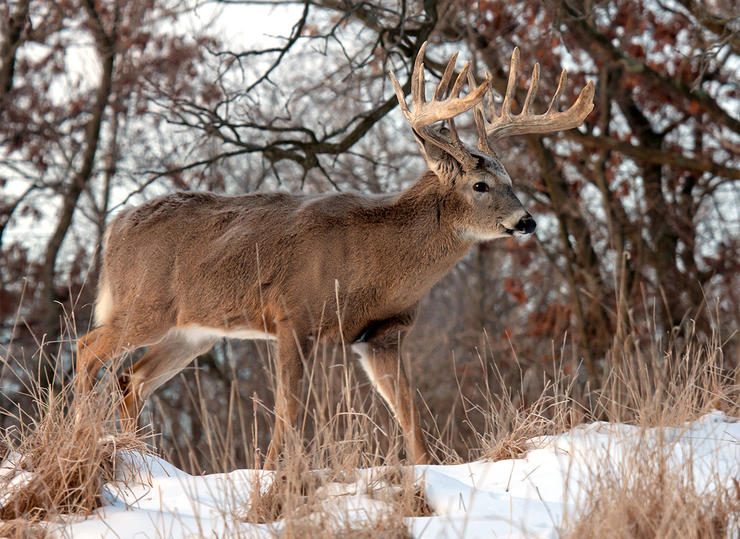 More bucks survive deer season than you think. You just have to find them. (Shutterstock / Critterbiz photo)