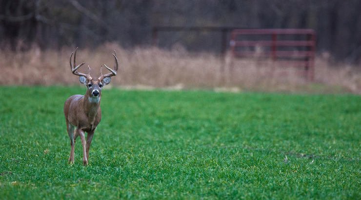 There are a few places you can still kill a deer in February. Don't throw in the towel just yet. (Russell Graves photo)
