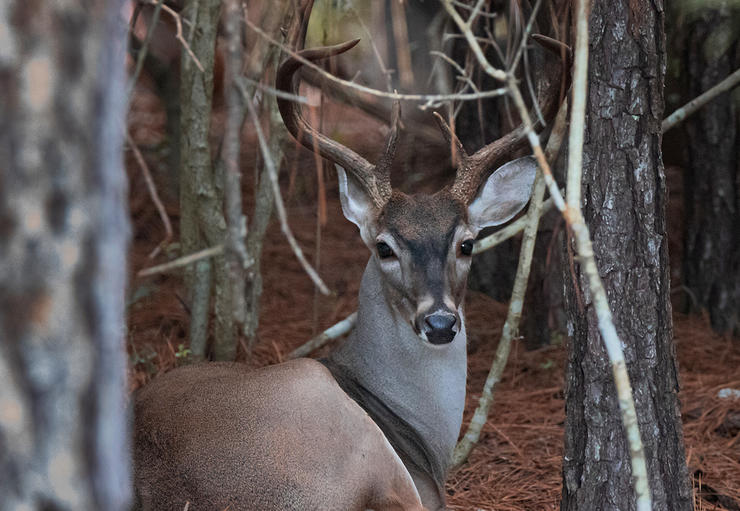 Reset the habitat clock and increase the deer density on your hunting land. (Shutterstock / Jake Daugherty photo)