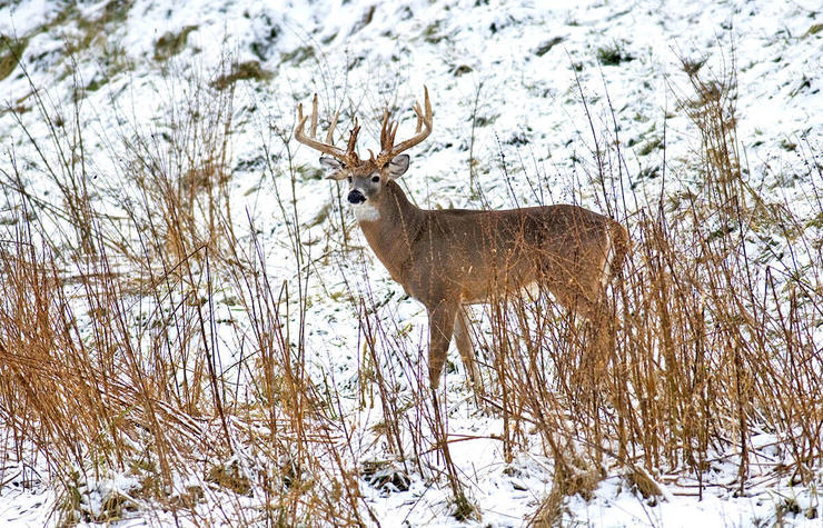 If you want to track a buck in the snow, you can't beat these five destinations. (John Hafner Image)