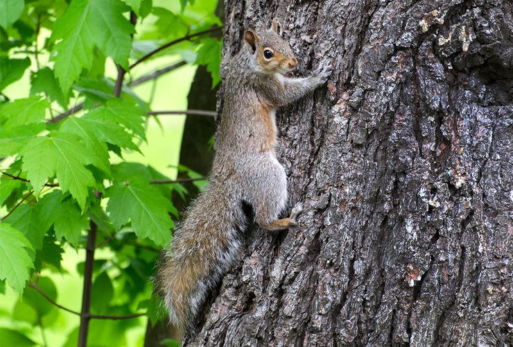 Springtime squirrel hunting provides opportunities to get outdoors and put food on the table. © Justin Dutcher-Shutterstock photo