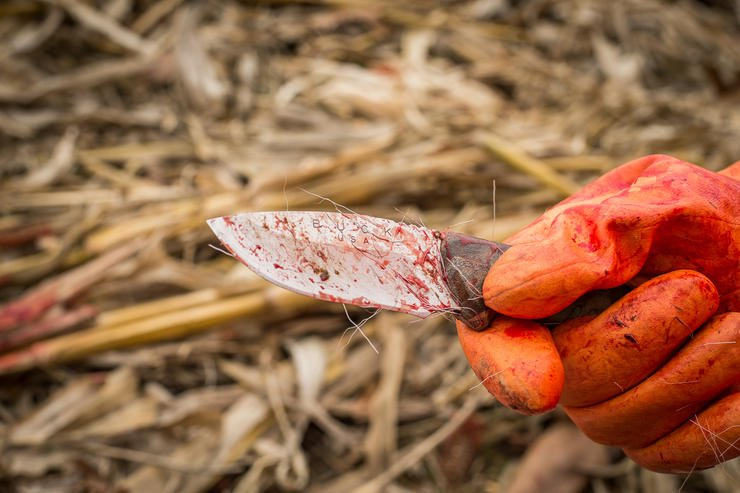Use a sharp knife, and work with the edge-side up. (Bill Konway Image)