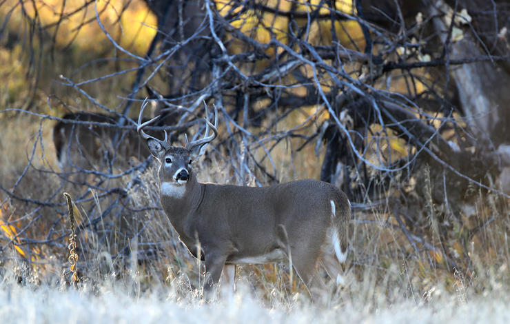 Don't sleep in on windy days. Go deer hunting instead. (Russell Graves photo)