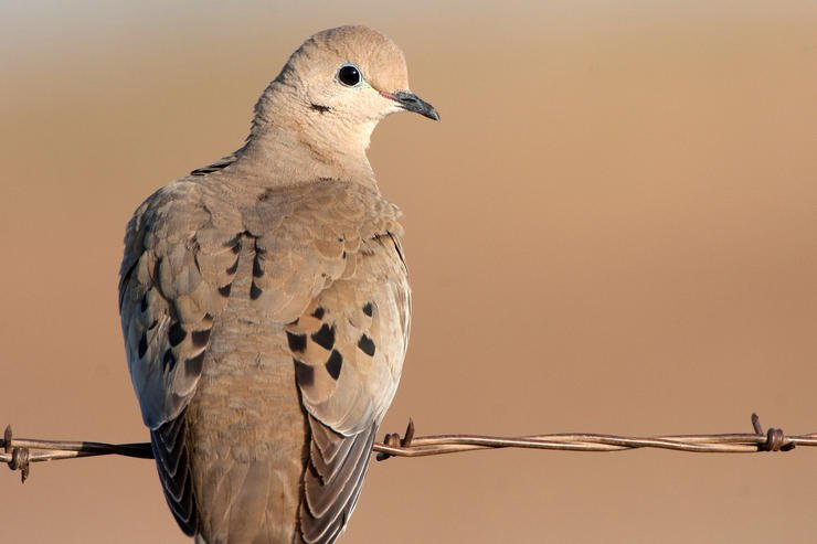 You don't have to have a dedicated dove field to shoot birds in September. (Russell Graves Image)