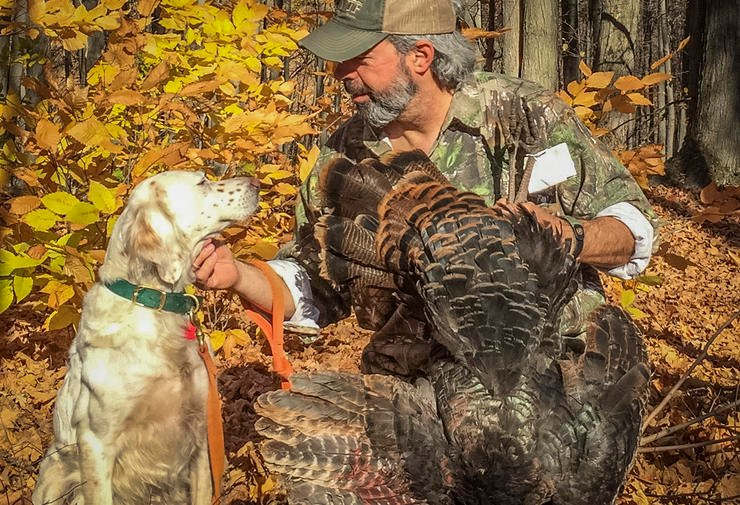 Some opportunities are expanding. Twenty-nine states, including Pennsylvania and Maine,  currently permit the use of dogs during the fall turkey season — featuring all the enjoyable aspects of other forms of upland bird hunting, with a few twists —to find and scatter flocks for your call-back session; up from just 11 states in the early '90s. (© Steve Hickoff photo)