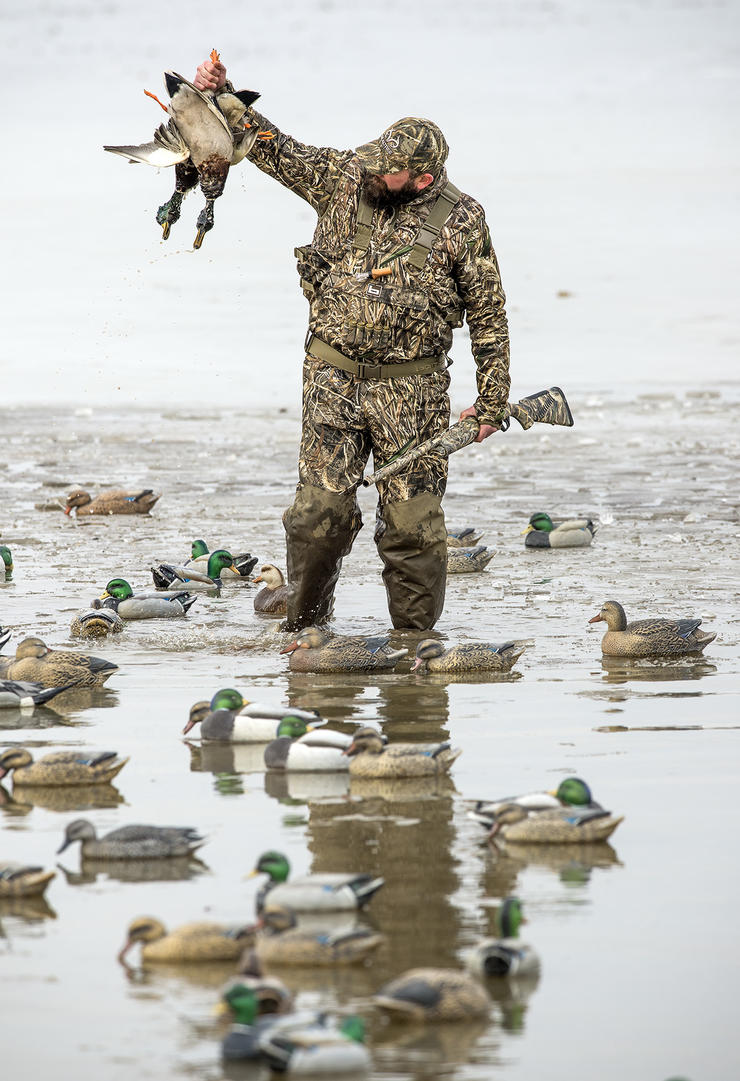 When hunting shoreline loafing areas, place some full-body goose or mallard decoys on land to give the impression that ducks are safe and content. Photo © Bill Konway