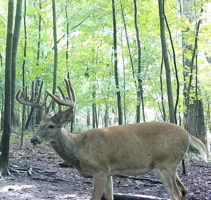 Warner chanced a sit close to the big deer's bedding area, and it paid off.