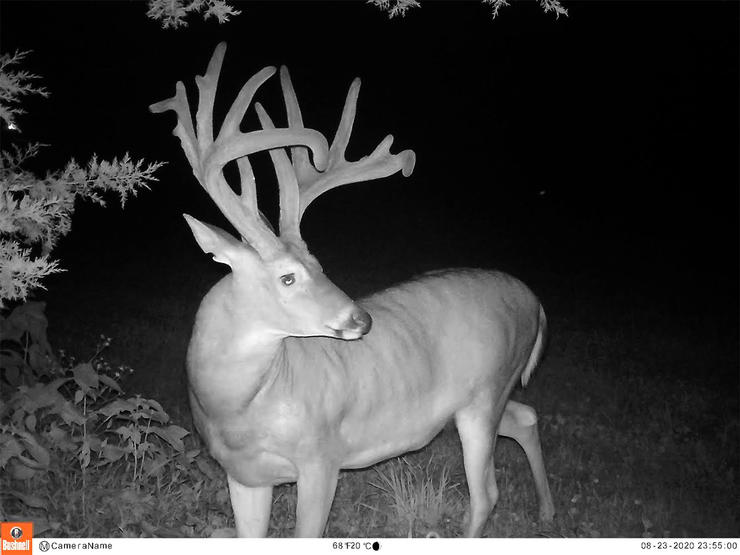 The buck spent most of the summer right next to the Linderer home.