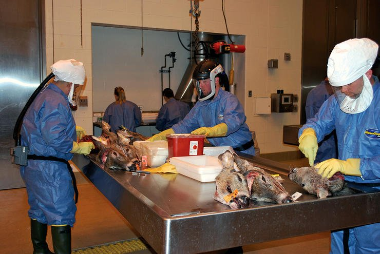 A group of biologists and technicians work with CWD test samples to help determine prevalence. (QDMA photo)