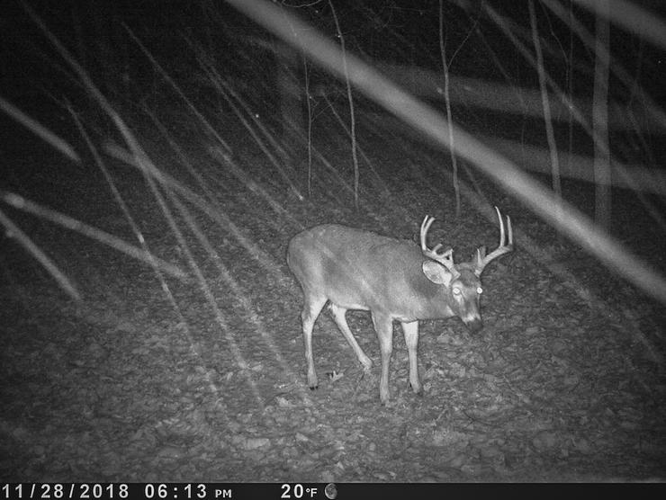 Trail cameras are key, but it's important to place them in the right locations to maximize their value. (Paul Annear photo)