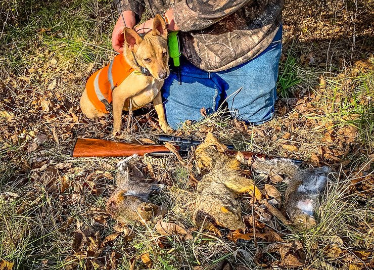A good morning in the woods with a dog can fill the freezer with squirrel meat. Image by Michael Pendley