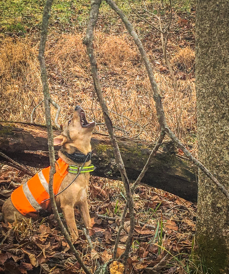 Don't shoot the squirrel until the dog is barking. Image by Potroast Pendley