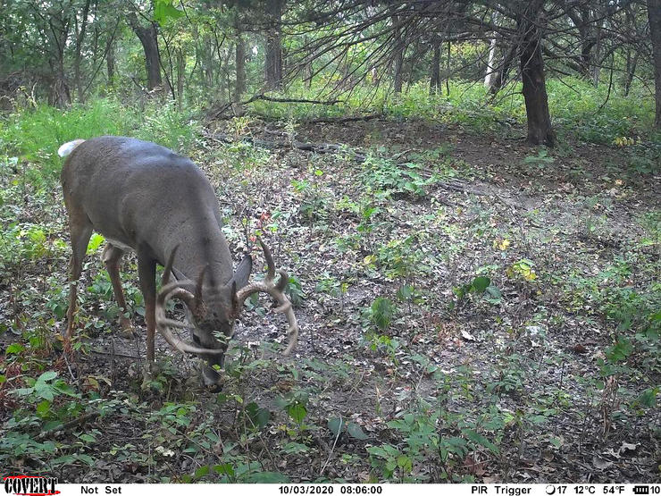 Hale scouted a lot in hopes of devising a plan to target this deer. It finally came together. Image by Eric Hale