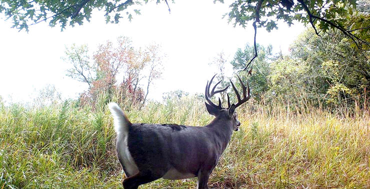 This buck got the best of Hale numerous times, but he finally caught the giant off guard. Image by Eric Hale