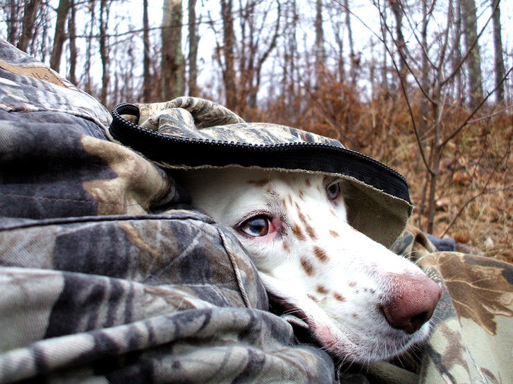 Love dogs and fall turkeys? This traditional hunting tactic is hard to beat. Image by Steve Hickoff