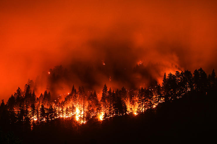 Wildfires displace wildlife, but the green-up in years following a burn can provide attractive habitat. Image by Christian Roberts-Olsen / Shutterstock