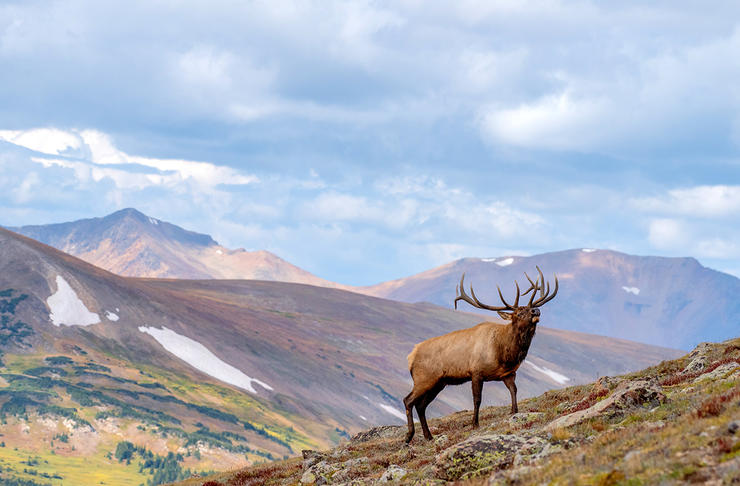 Getting a shot opportunity at an elk is earned. Image by Shutterstock / Cornelius Doppes