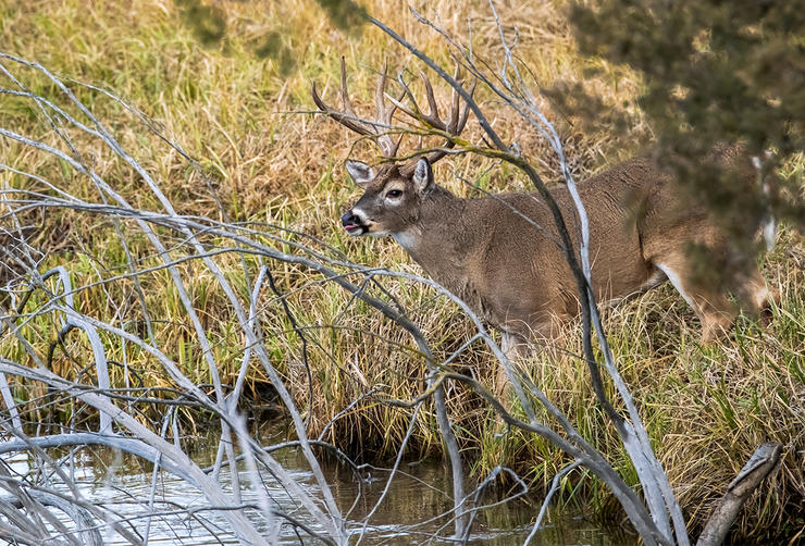 Don't underestimate the power of a watering hole in October. Image by John Hafner