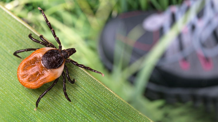 Wear protective clothing and use insect repellant to prevent tick bites. Image by Kpixmining/Shutterstock