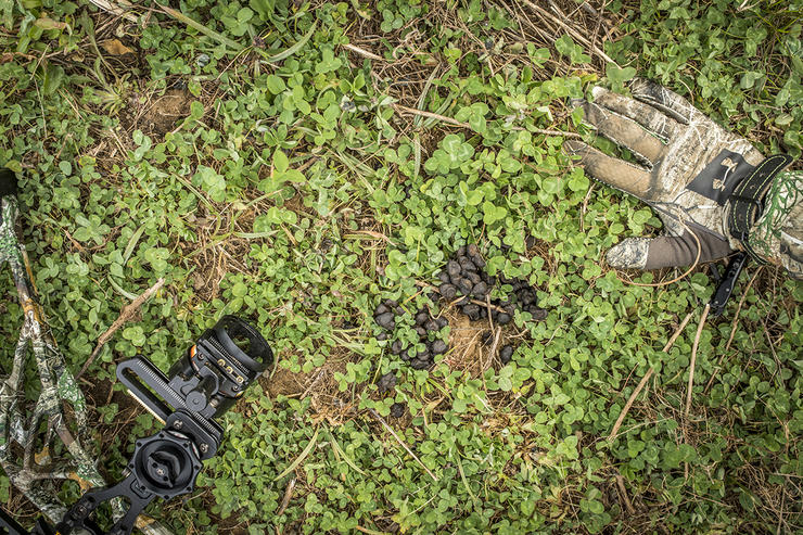 Planting a micro food plot is an excellent way to draw deer in for the shot. Image by Realtree Media