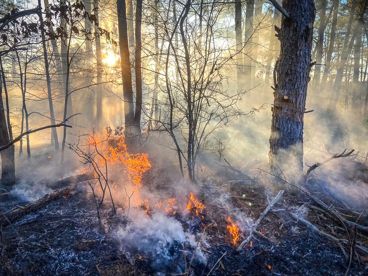 Slow backing fires are the safest for burning areas with a high fuel load. Image by Will Brantley