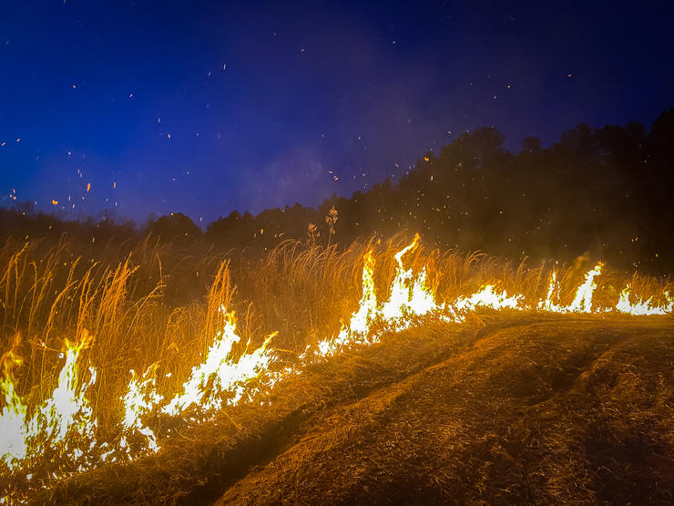 Good firebreaks are the most essential step for keeping a prescribed fire contained. Image by Will Brantley