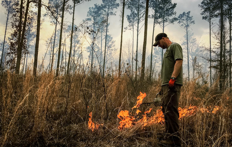 Early spring is the traditional time to apply prescribed fire. Image by Realtree