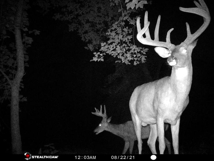 A trail camera photo of Lacefield's buck.
